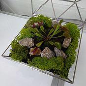 Флорариумы ручной работы. Ярмарка Мастеров - ручная работа Флорариумы: Флорариум для хищного растения. Handmade.