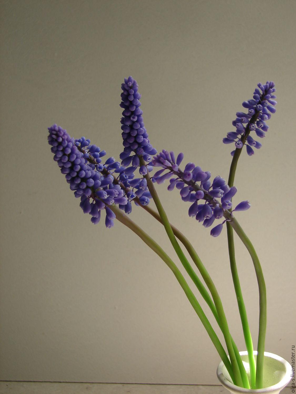 Мускари цветы купить заказ и доставка цветов петербур