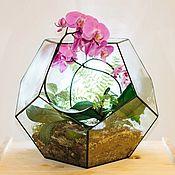 Флорариумы ручной работы. Ярмарка Мастеров - ручная работа Флорариум большой с орхидеями и лиственной композицией. Handmade.