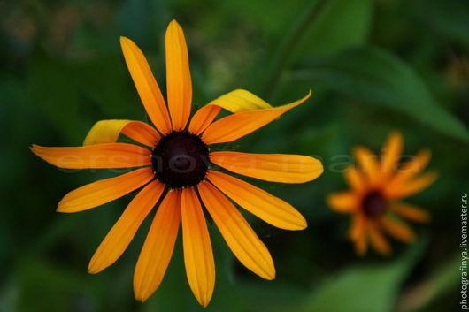 Баллада о саде. Авторская фотокартина. Ершова Мария