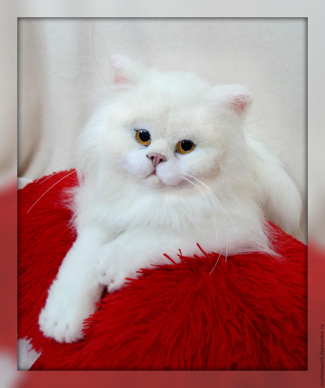Купить кота живого