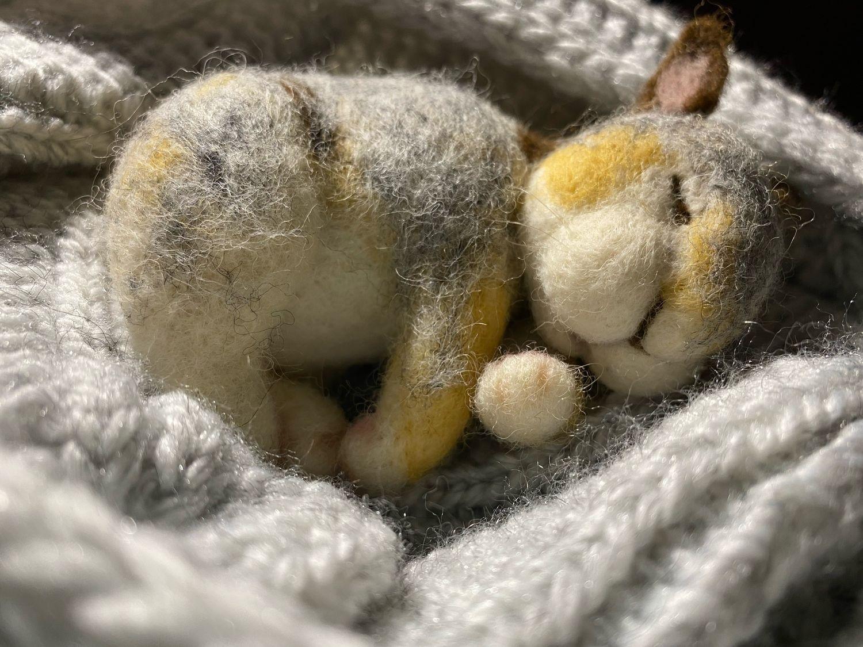 спит зайка с белкой фото очень