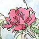 Картины цветов ручной работы. Шиповник. Олеся Тарасова (o-lissa). Ярмарка Мастеров. Куст, рисунок, акварель, нежный, тушь