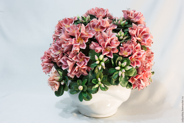 Купить цветы азалия в украине, днем
