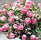 Букет из живых цветов Розовые тюльпаны