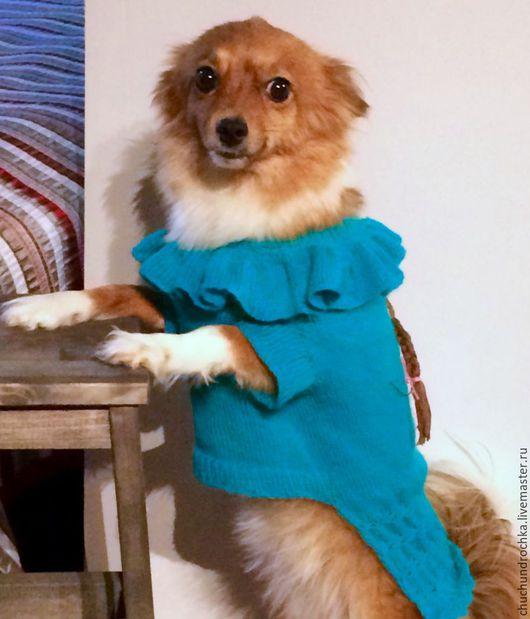 Одежда для собак, ручной работы. Ярмарка Мастеров - ручная работа. Купить Платье Девочка. Handmade. Бирюзовый, прогулка, девочка