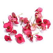 Сухоцветы ручной работы. Ярмарка Мастеров - ручная работа Цветы для эпоксидной смолы. Handmade.