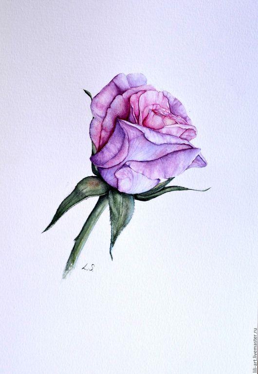Картины цветов ручной работы. Ярмарка Мастеров - ручная работа. Купить картина акварелью Роза. Handmade. Сиреневый, картина акварелью
