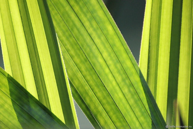 """Green collection - 3"" авторская фотокартина, Бали, 2019 г, Фотокартины, Москва,  Фото №1"