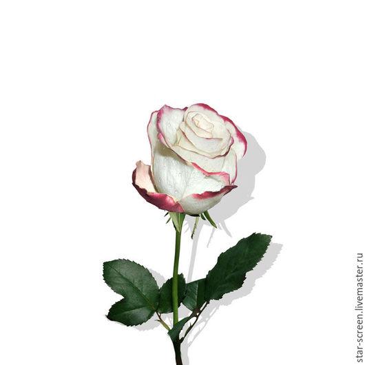картина. картина для интерьера. картина с цветами.  картина роза. белый. красный. серый. белый фон.  белая роза. бело-красная роза. фотокартина. красный и белый. белый и серый. бордо
