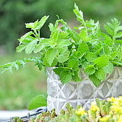 Цветы и флористика handmade. Livemaster - original item Flower pot concrete grey TECHNOOVAL for cacti and succulents. Handmade.