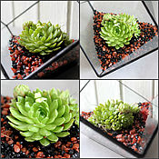 Цветы и флористика handmade. Livemaster - original item The Floriana.Interior stained-glass Floriana. Mini garden plant. Handmade.