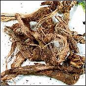 Красный корень - травы Крыма