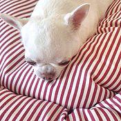 Для домашних животных, ручной работы. Ярмарка Мастеров - ручная работа Ватрушка Французская. Handmade.