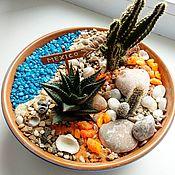 Мини-садик Мексика