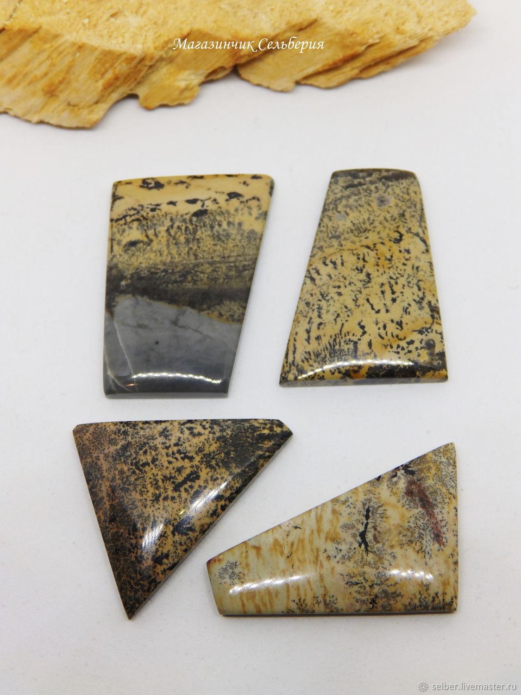 Cabochon siltstone, Cabochons, Gatchina,  Фото №1