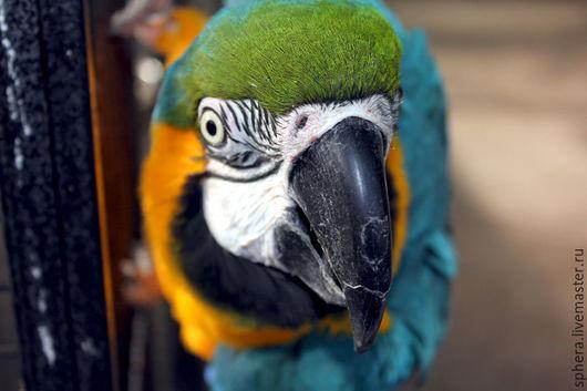 """Фотокартины ручной работы. Ярмарка Мастеров - ручная работа. Купить Фотокартина """"Любопытный попугай"""". Handmade. Разноцветный, фотография, фото, фотопечать"""