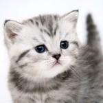 Игровые комплексы для кошек - Ярмарка Мастеров - ручная работа, handmade