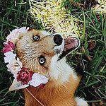 Red Fox (AnnaFox27) - Ярмарка Мастеров - ручная работа, handmade