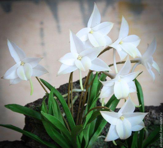 Интерьерные композиции ручной работы. Ярмарка Мастеров - ручная работа. Купить Орхидея Ангрекум (Сецилийский) из флористической глины. Handmade.