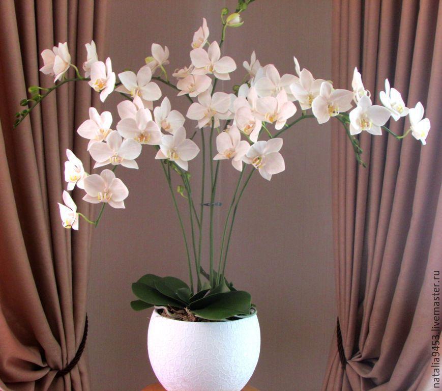 Орхидея белая купить