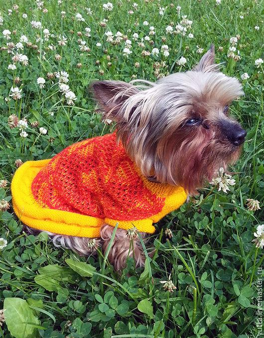 Одежда для собак, ручной работы. Ярмарка Мастеров - ручная работа. Купить Платье для собаки. Handmade. Комбинированный, тойтерьер, пряжа для вязания