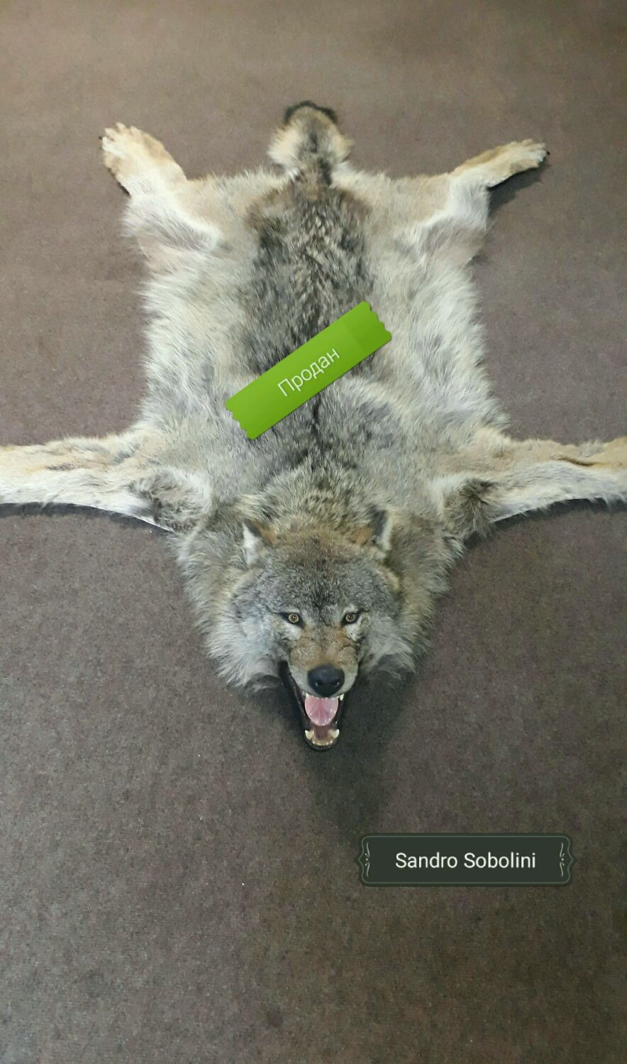 Как сделать ковер из шкуры волка