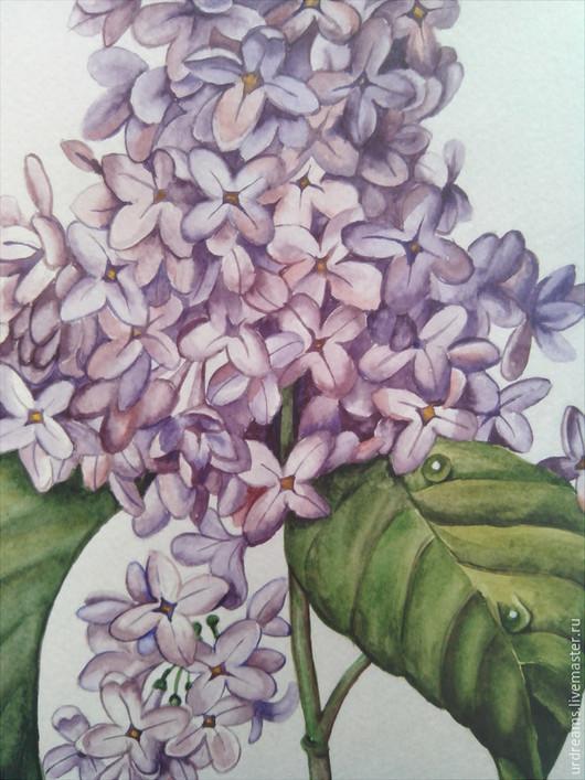 Картины цветов ручной работы. Ярмарка Мастеров - ручная работа. Купить Сирень. Handmade. Сиреневый, ботанический рисунок