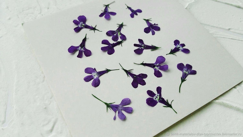 Dried Lobelia flower(15pcs in a set), The dried flowers, Barnaul,  Фото №1