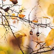 """Украшения ручной работы. Ярмарка Мастеров - ручная работа Серебряные серьги с какоксенитом """"Мелодия Осени"""". Handmade."""