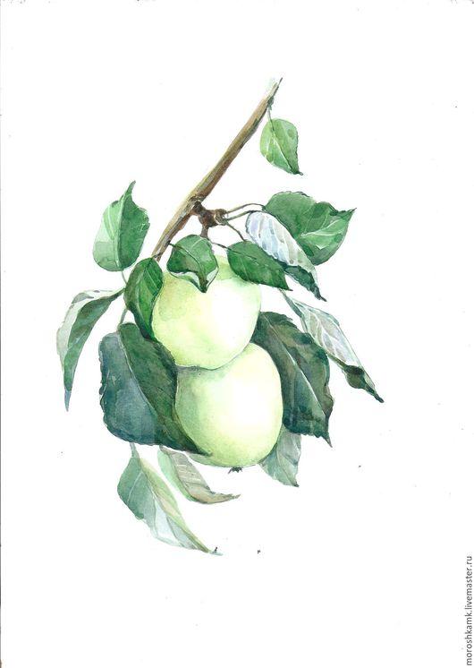 Картины цветов ручной работы. Ярмарка Мастеров - ручная работа. Купить Акварель. Два зеленых яблока.. Handmade. Салатовый, осень