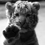 Белый Тигр(детальки для творчества) - Ярмарка Мастеров - ручная работа, handmade