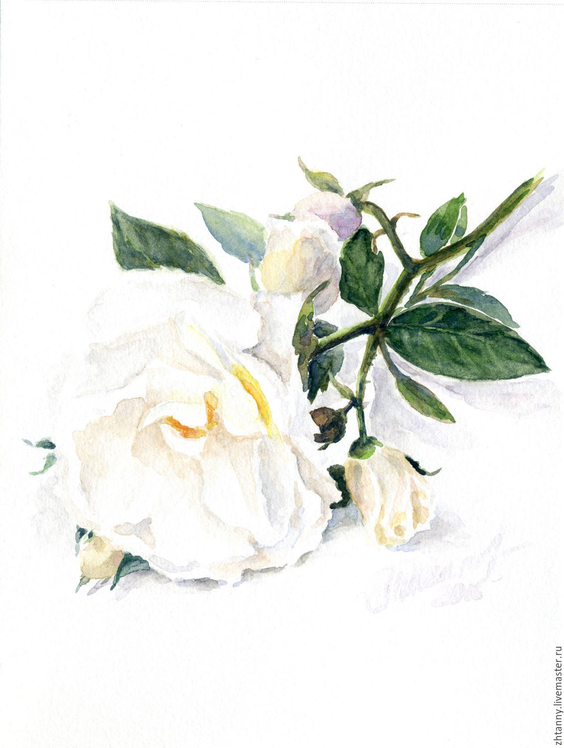 "Giclee from watercolor, ""the White rose"" – shop online on"