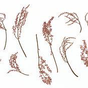 Сухоцветы ручной работы. Ярмарка Мастеров - ручная работа Соцветия различных растений. Гербарий плоская засушка.. Handmade.