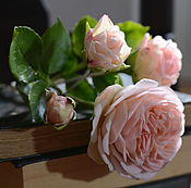 Цветы и флористика handmade. Livemaster - original item English rose with a simple tint.Floral sculpture.. Handmade.